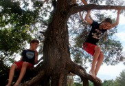 Afbeelding - De beste basisschool die past bij jouw manier van opvoeden waar je kind de beste versie van zichzelf kan worden - happy parents happy kids Kinderen die in een boom aan leren zijn.